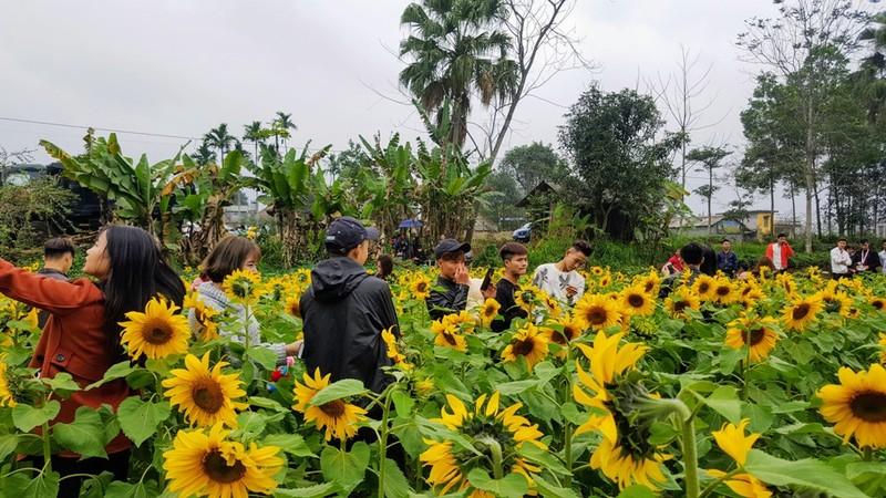 Người dân đổ xô đi chụp ảnh với hoa hướng dương - ảnh 7