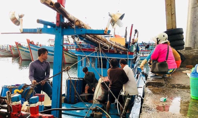 Dân thích thú với thịt cá mập giá 50 ngàn/kg - ảnh 1
