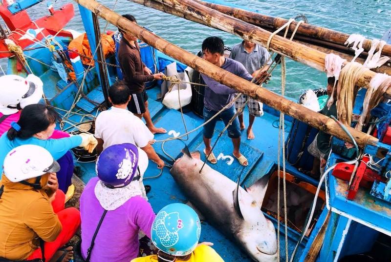 Dân thích thú với thịt cá mập giá 50 ngàn/kg - ảnh 3