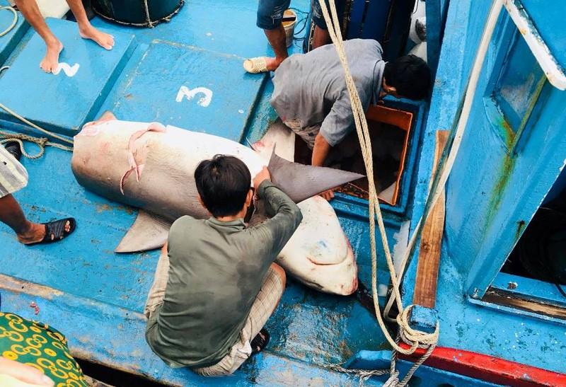 Dân thích thú với thịt cá mập giá 50 ngàn/kg - ảnh 2