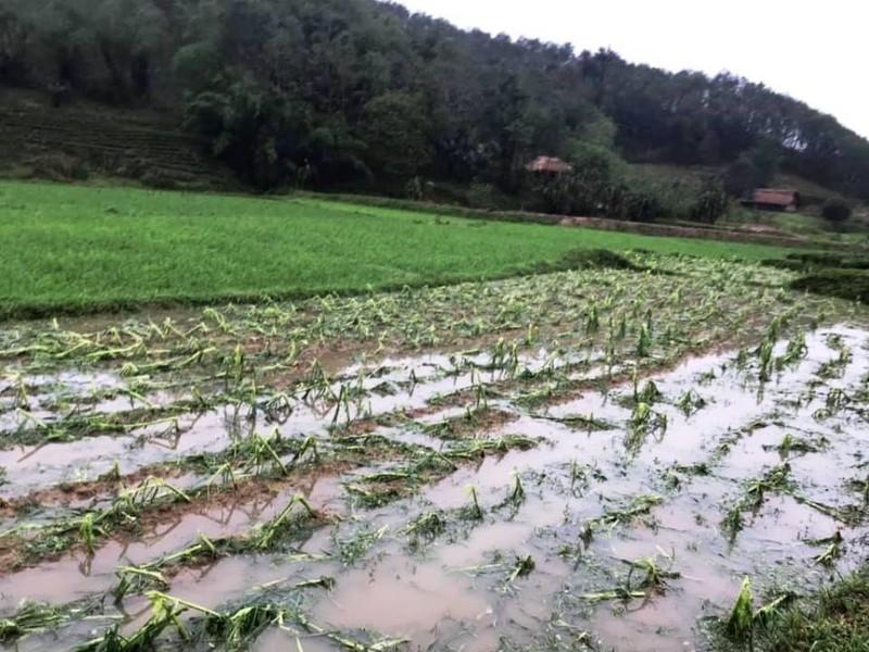 Thái Nguyên tan hoang vì giông lốc, mưa đá - ảnh 1