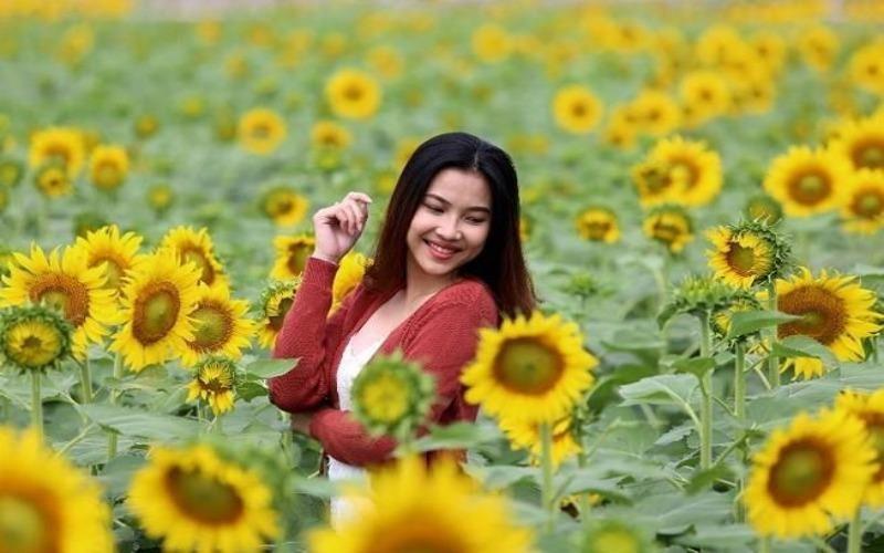Lễ 30-4 thăm vườn hoa hướng dương gây sốt ở TP.HCM - ảnh 1