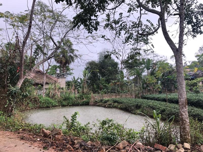 Thái Nguyên: Mùng 1 tết có mưa rào - ảnh 3