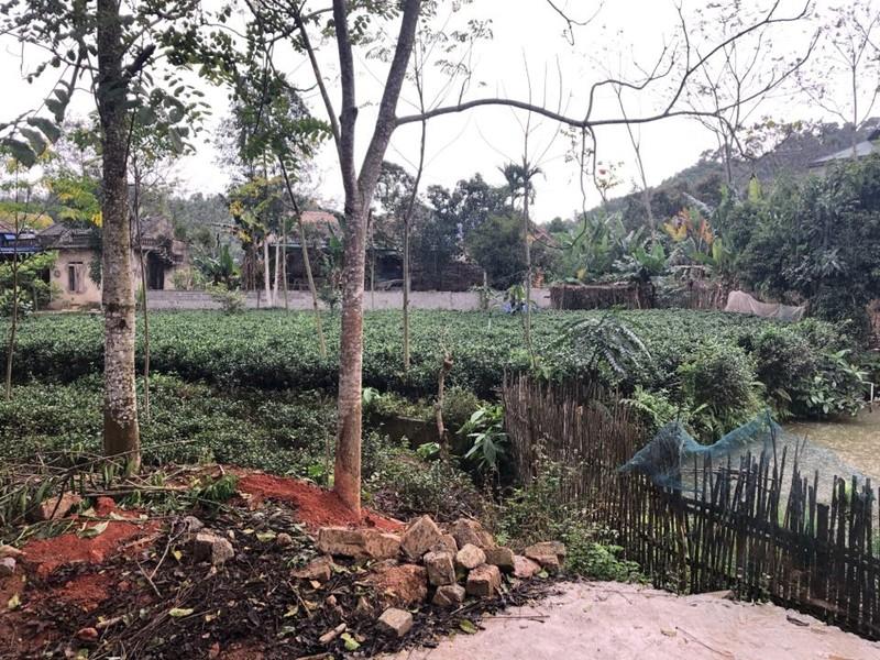 Thái Nguyên: Mùng 1 tết có mưa rào - ảnh 2
