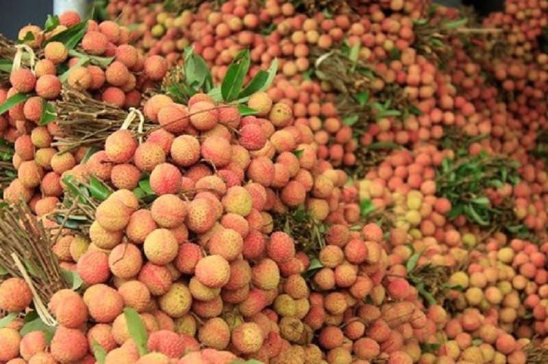 Nhãn xuất khẩu của Việt Nam phụ thuộc gần 100 % vào TQ - ảnh 1