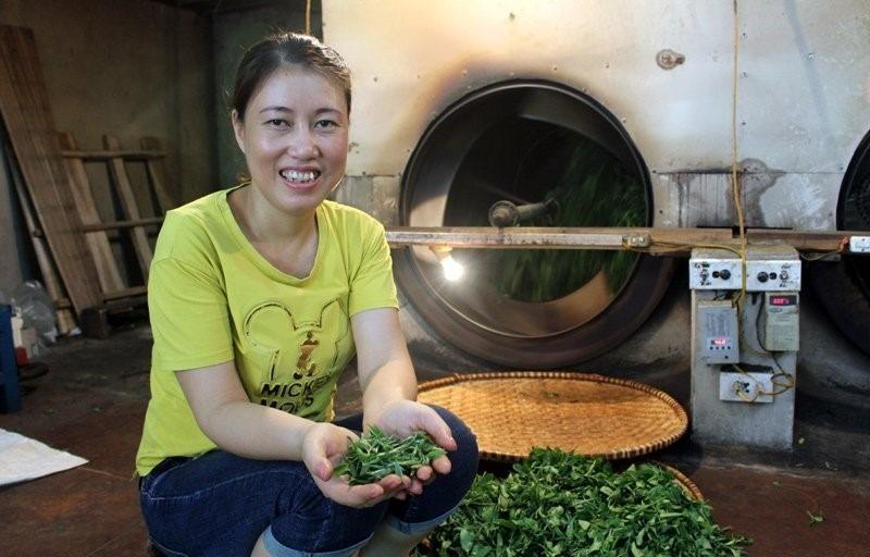 Kiếm bộn tiền từ loại trà đắt đỏ: 4 triệu đồng/kg - ảnh 2