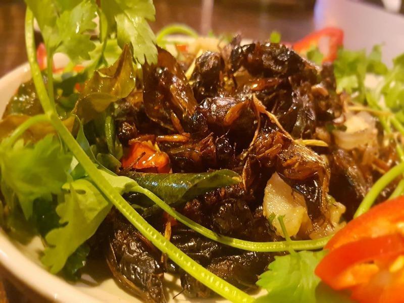 Ăn côn trùng lại rất tốt cho đường ruột?  - ảnh 1