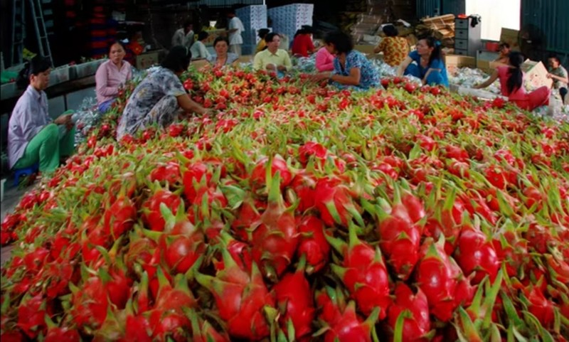 Dân Trung Quốc không dám đi chợ, thanh long Việt lao đao - ảnh 1