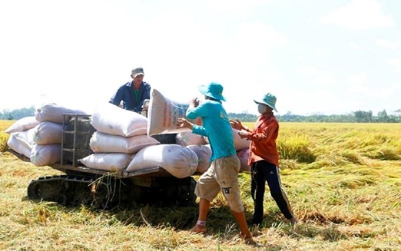 Kêu cứu Thủ tướng Chính phủ vụ đăng ký xuất gạo lúc... 0 giờ - ảnh 1