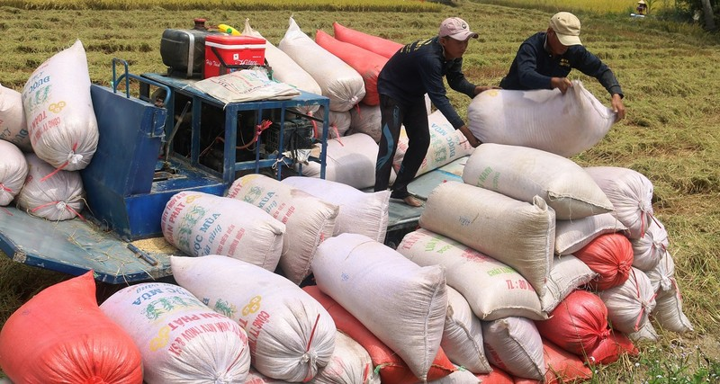 Té ngửa với cú mở cửa đăng ký xuất khẩu gạo lúc nửa đêm - ảnh 1