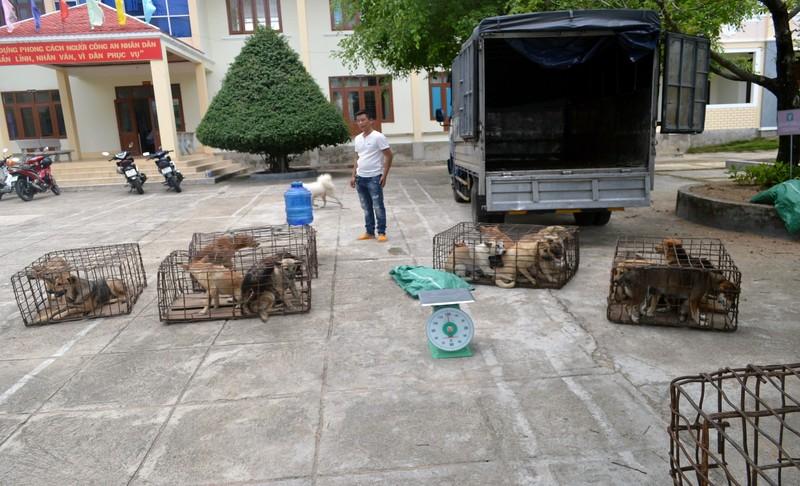 Ba thanh niên lái xe tải từ Đắk Lắk qua Gia Lai trộm chó - ảnh 2