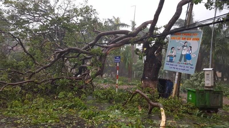 Bão số 12 tan thành áp thấp, mưa lũ trải dài miền Trung - ảnh 3