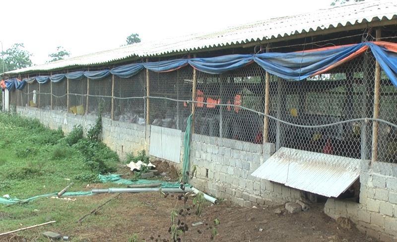 Bắt kẻ đột nhập trang trại trộm cắp 1.400 con gà trong đêm - ảnh 1