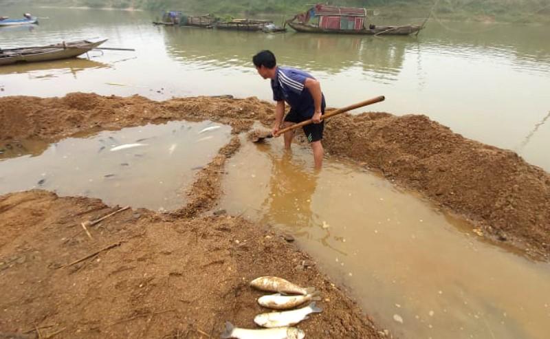 Công an vào cuộc vụ cá chết bất thường trên sông Chu - ảnh 4