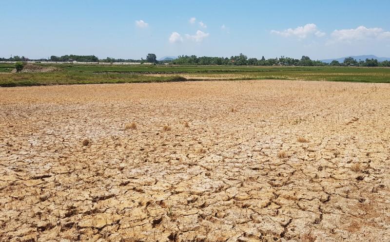 Hàng ngàn hecta lúa xứ Thanh sắp chết khát vì hạn hán - ảnh 4