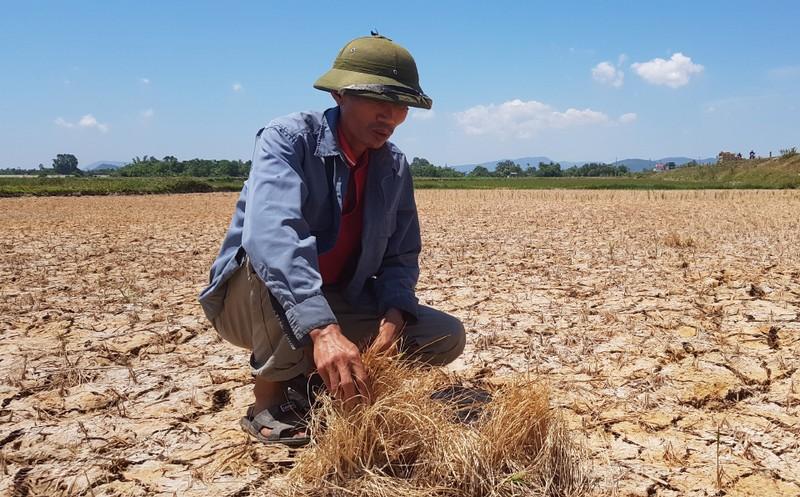 Hàng ngàn hecta lúa xứ Thanh sắp chết khát vì hạn hán - ảnh 6