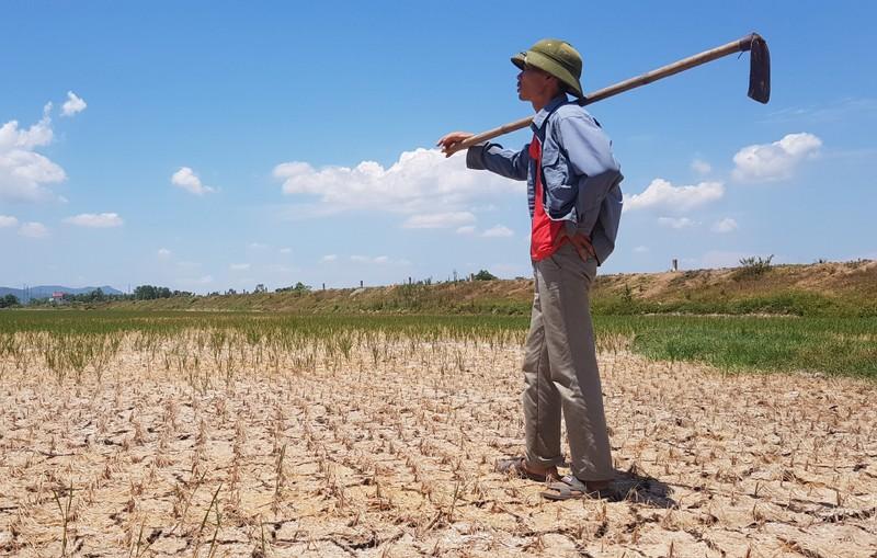 Hàng ngàn hecta lúa xứ Thanh sắp chết khát vì hạn hán - ảnh 2