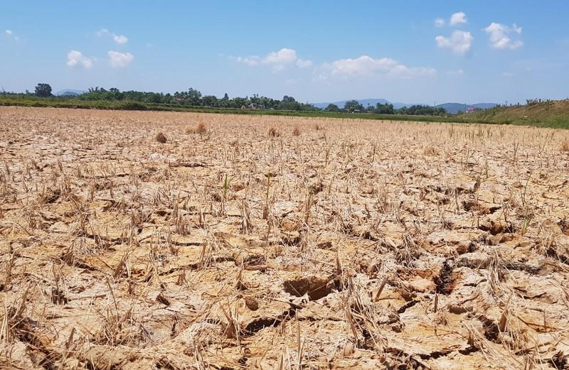 Hàng ngàn hecta lúa xứ Thanh sắp chết khát vì hạn hán - ảnh 3