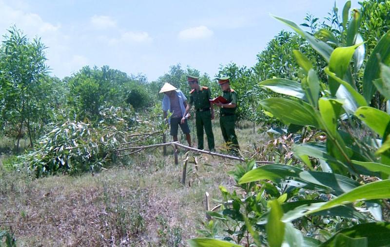 3 người vào chặt phá hơn 700 cây keo trong đêm - ảnh 1