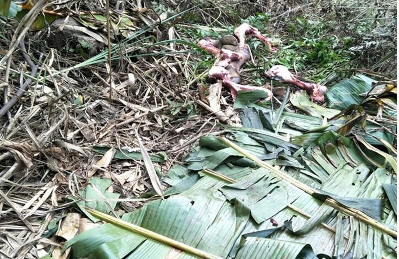 Nhóm chuyên nhử trâu bò vào rừng sâu để giết trộm - ảnh 1