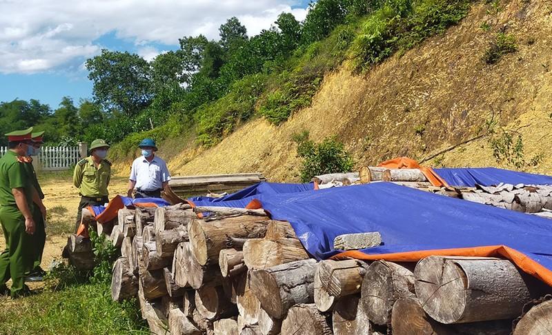 1 đại biểu HĐND xã ở Thanh Hóa bị bắt vì phá rừng - ảnh 1