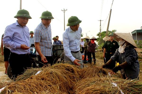 Nông dân Hải Phòng gặt lúa chạy bão số 7  - ảnh 12
