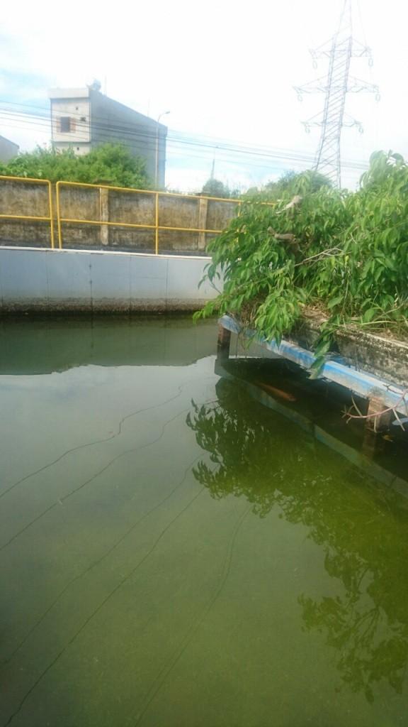 Hệ thống xử lý nước thải nhà máy Coca-Cola VN đạt chuẩn - ảnh 1