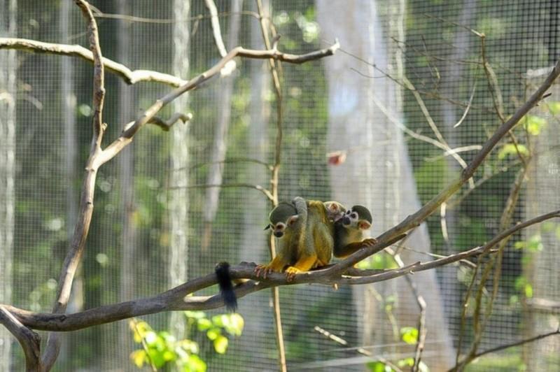 Vinpearl Safari Phú Quốc đón 2 cá thể tê giác chào đời - ảnh 3