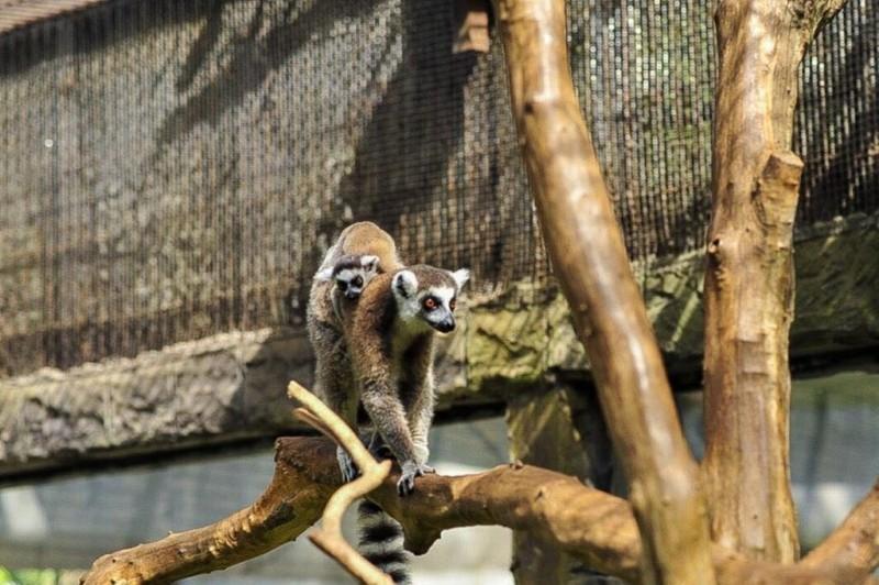 Vinpearl Safari Phú Quốc đón 2 cá thể tê giác chào đời - ảnh 4