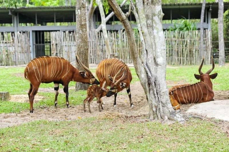 Vinpearl Safari Phú Quốc đón 2 cá thể tê giác chào đời - ảnh 6