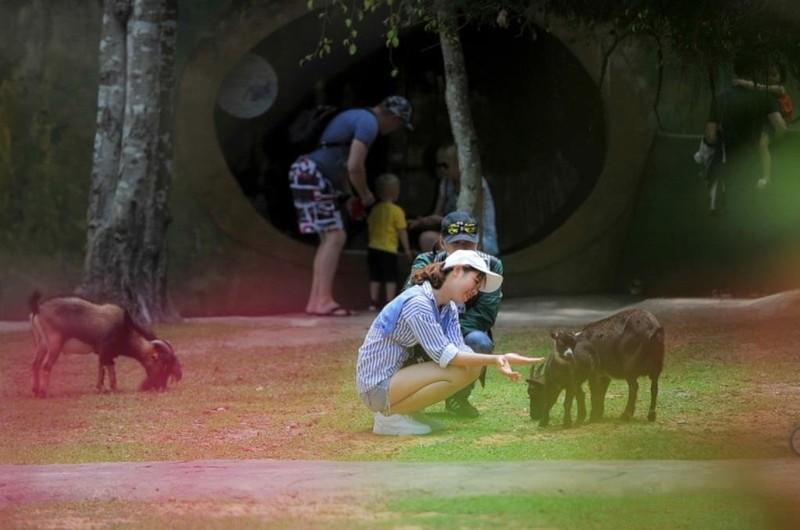 Vinpearl Safari Phú Quốc đón 2 cá thể tê giác chào đời - ảnh 7