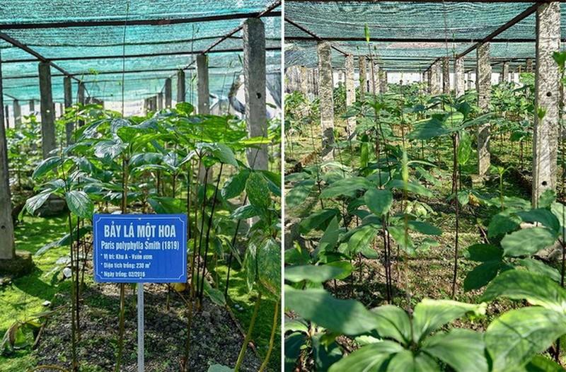 Làm sống lại những cây thuốc quý hiếm tại Việt Nam - ảnh 1
