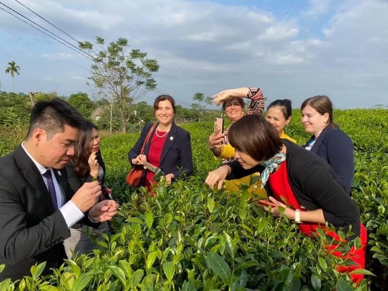 Những lợi ích khi dùng chè Thái Nguyên tại Hải Trà Tân Cương - ảnh 2