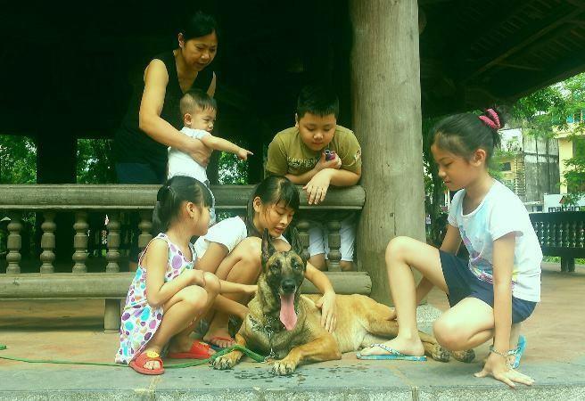 Vì sao chó hay cắn trẻ em? - ảnh 1