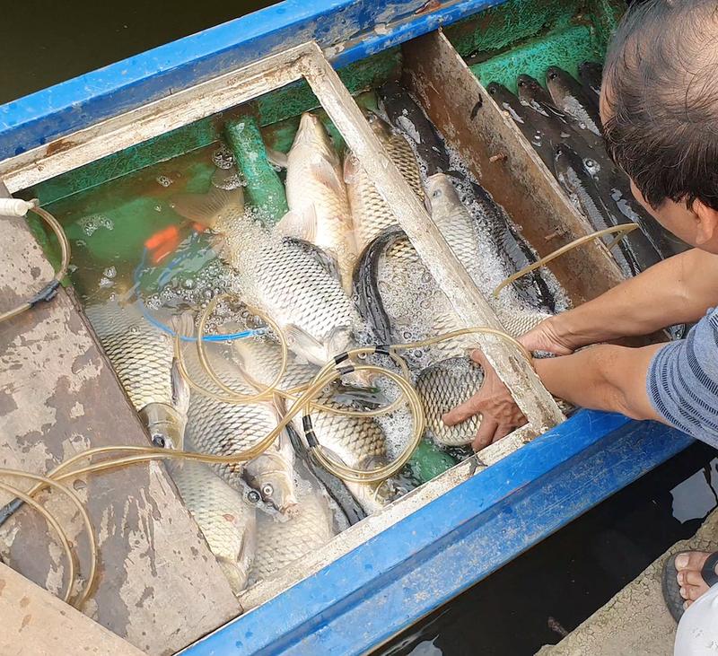 2 người chích cá trên sông Sài Gòn bị bắt  - ảnh 3