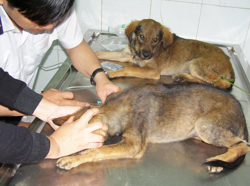 Nam Bộ và Lâm Đồng nhiễm giun đũa chó cao - ảnh 1