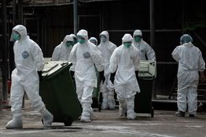 Nhân viên y tế tiêu hủy gia cầm tại một chợ gia cầm ở Hong Kong. (Nguồn: AFP/TTXVN)