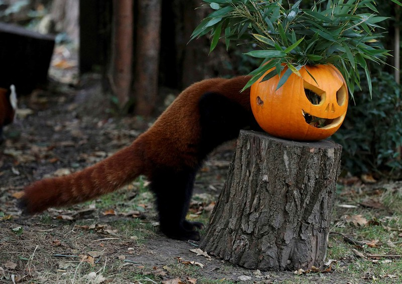 Sắc màu ma quái của lễ Halloween trên khắp thế giới - ảnh 6
