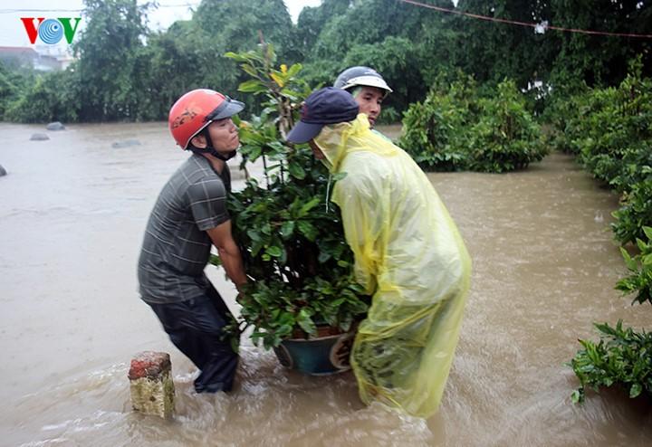 Người dân Bình Định 'vật lộn' trong lũ để cứu mai - ảnh 2