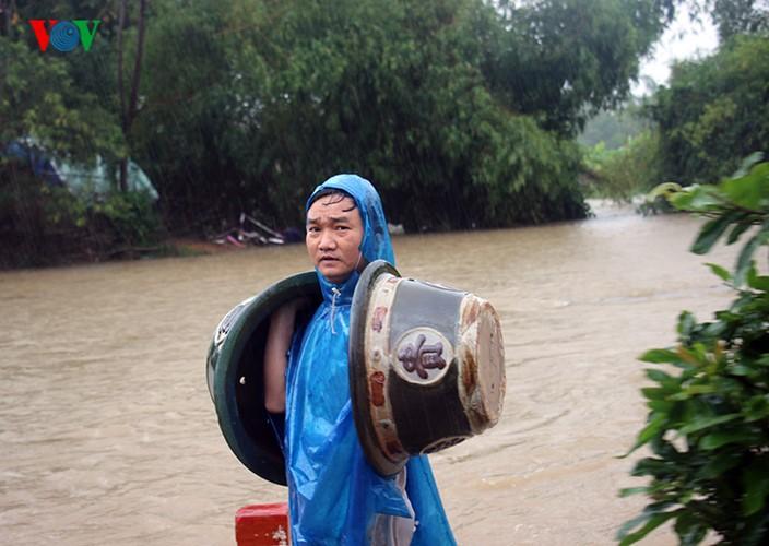 Người dân Bình Định 'vật lộn' trong lũ để cứu mai - ảnh 3
