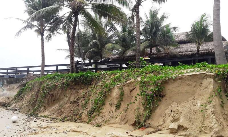 Biển Mỹ Khê lại bị sạt lở sau mưa lớn - ảnh 2