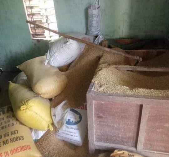 Một người dân báo mất 49 cây vàng giấu trong thùng lúa - ảnh 1