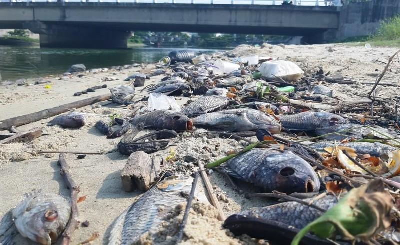 Cá chết hàng loạt dọc bờ biển Đà Nẵng do nước xả thải - ảnh 1