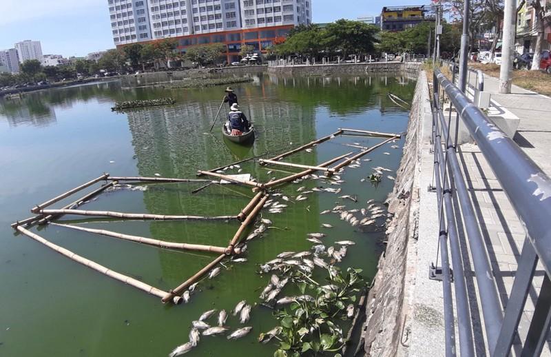 Cá nổi lềnh bềnh trong hồ mà ông Dũng 'lò vôi' định cải tạo - ảnh 2