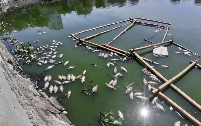 Cá nổi lềnh bềnh trong hồ mà ông Dũng 'lò vôi' định cải tạo - ảnh 1