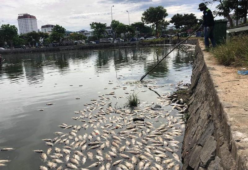 Hàng tấn cá chết nổi trắng hồ, bốc mùi giữa trung tâm Đà Nẵng - ảnh 2