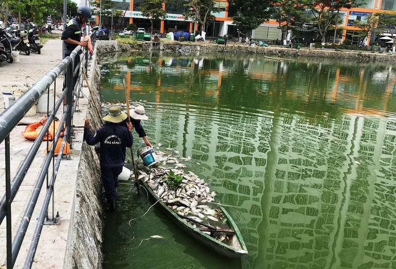 Hàng tấn cá chết nổi trắng hồ, bốc mùi giữa trung tâm Đà Nẵng - ảnh 1