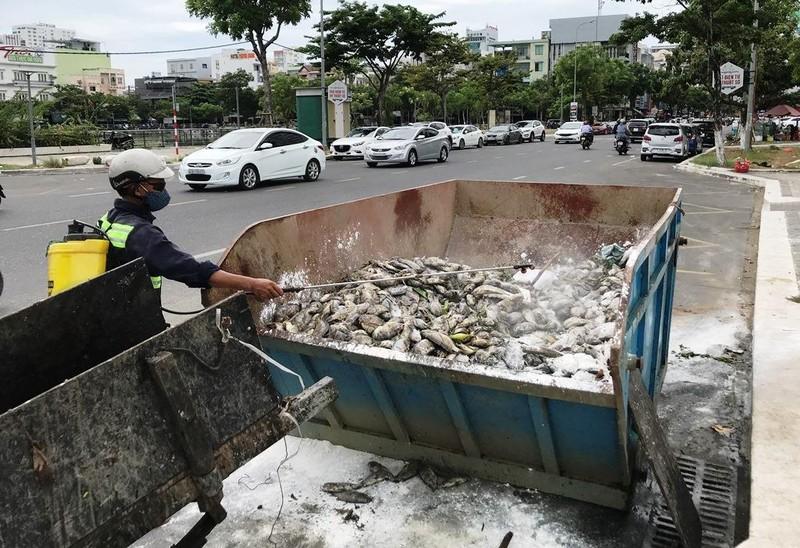Hàng tấn cá chết nổi trắng hồ, bốc mùi giữa trung tâm Đà Nẵng - ảnh 3