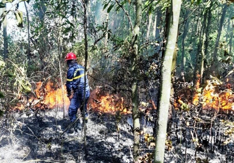 Hàng trăm người chữa cháy rừng ở Đà Nẵng - ảnh 1