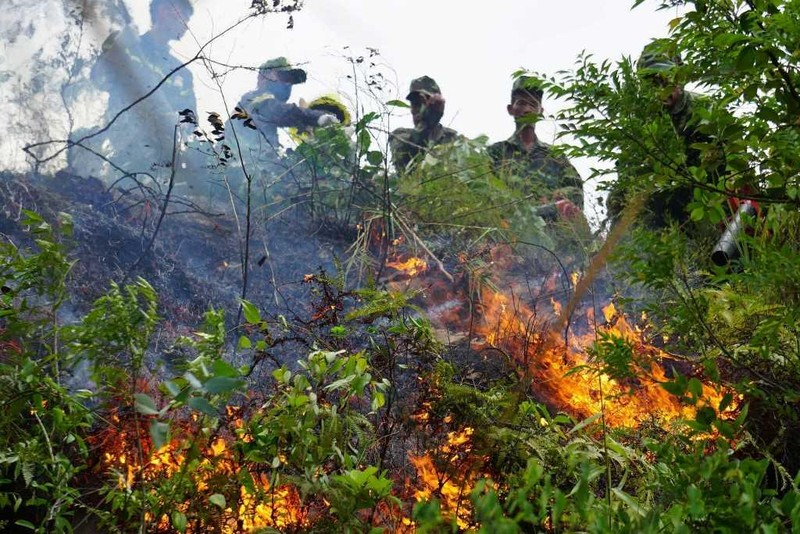 Đà Nẵng: Rừng tự nhiên cháy, dập lửa khó vì vướng dây leo - ảnh 2